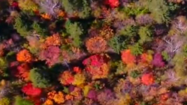 吉林延边漫山红叶 层林尽染