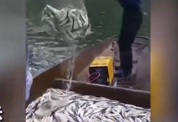 实拍多人在湖上非法电鱼 大片死鱼浮出水面