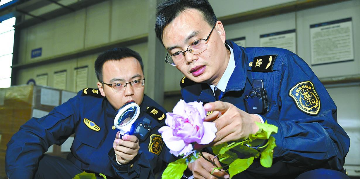 湖南航空口岸首次进口鲜花 3939枝荷兰鲜花运抵长沙