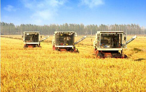 [十九大代表在基层]范振喜:农业农村现代化是干出来的