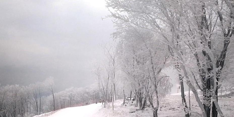 吉林现雾凇美景 银装素裹似童话世界