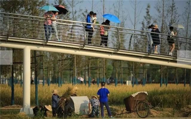 城头山遗址公园获2017世界景观大奖