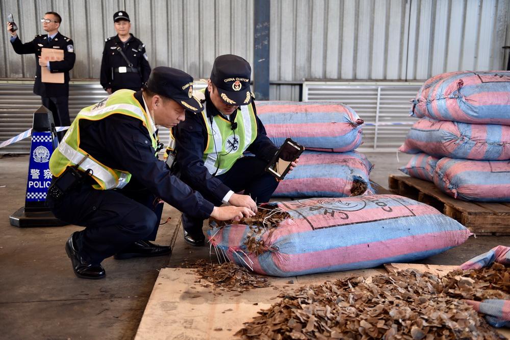 11月29日,在深圳盐田港,海关关员查看缴获的走私穿山甲鳞片。
