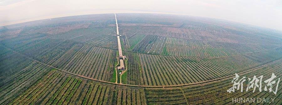 沅江市南洞庭湖自然保护区核心区,成片欧美黑杨已经清理完毕