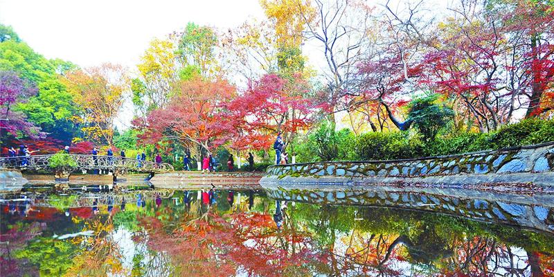 """暖阳照射下的湖南烈士公园五彩斑斓 如披""""冬装"""""""