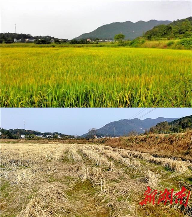 [长沙] 【看图赋诗说理】秋有秋的景,冬有冬的美 新湖南www.hunanabc.com