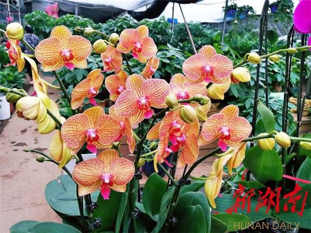 [长沙] 冬日长沙别样红(之十) 新湖南www.hunanabc.com