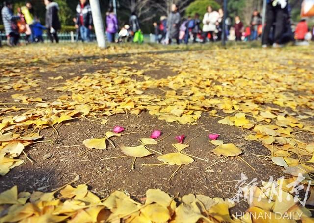 "冬日""舞曲"" 新湖南www.hunanabc.com"