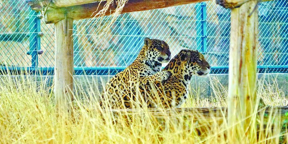 长沙生态动物园:动物朋友温暖过冬