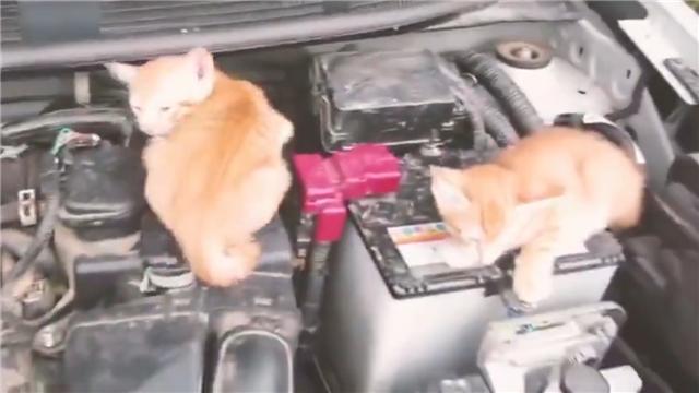 天冷了,开车前请拍拍车盖