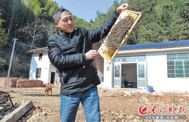浏阳市淳口镇枫林湖村村民胡益阳2017年通过养蜂脱贫。长沙晚报记者 邹麟 摄