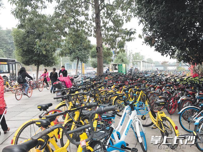 日前,在金星路地铁站附近的人行道上,各类共享单车数量多得一眼看不到头。 长沙晚报记者聂映荣 摄