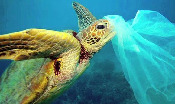 海龟会因人类丢弃的海洋垃圾而受到生命威胁