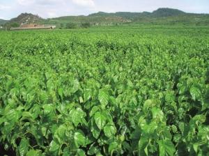 蔬菜出口量值连续四年排名全省第一