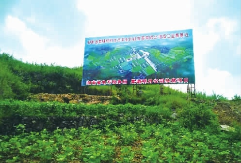 省地税局扶贫项目——黄罗湾村蓝莓产业基地