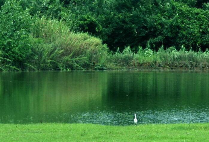 住湘政协委员联名呼吁 加强东洞庭湖国际重要湿地保护