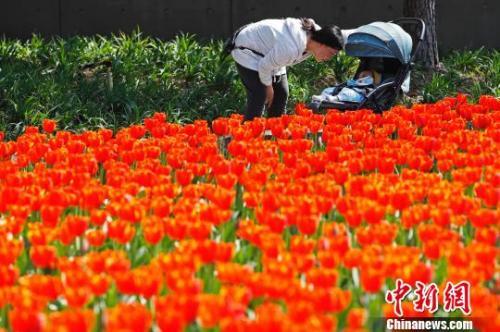 近日,上海气温回升,市民带着孩子在静安雕塑公园享受春意。 殷立勤 摄