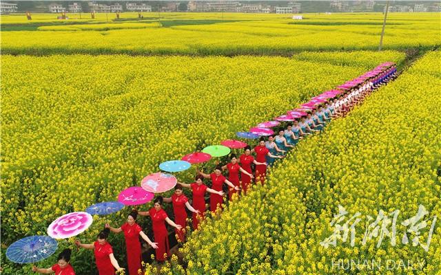 华山村的连片长条形油菜花海,宛若一幅醉人的江南山水田园画;登上金华