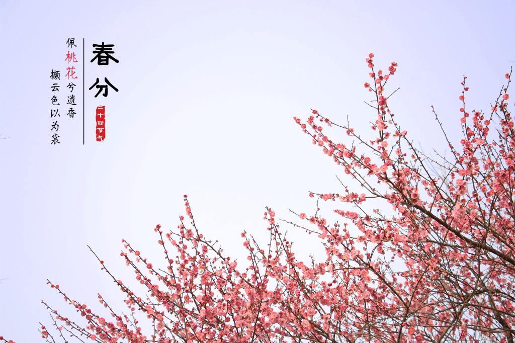 [长沙] 【今日春分】春由此分去,悄然燕归来