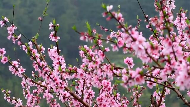 春满潇湘:农旅联姻 致富乡村