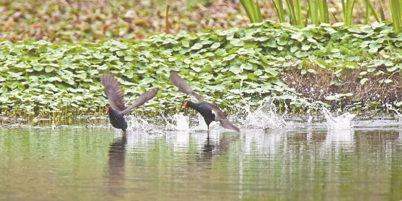 长沙西湖文化园春日碧波鸟乐园