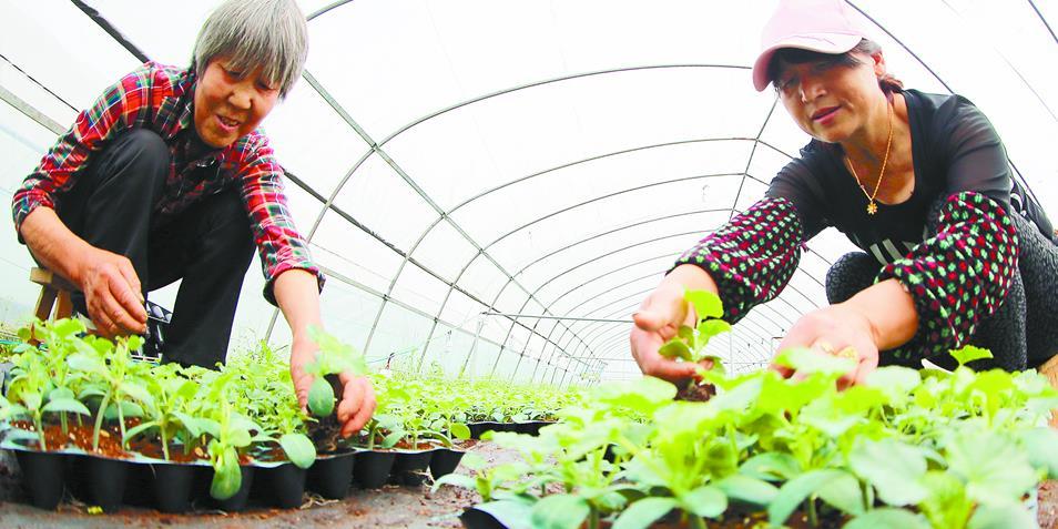 衡阳雁峰区产业扶贫基地春意浓