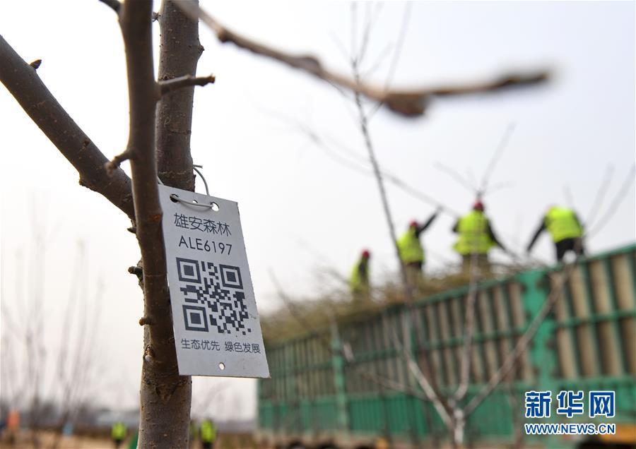 有玩彩票的app吗:建千秋之城_办国家大事――河北雄安新区建设发展一周年纪实