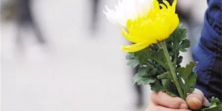 清明节将至,湖南提供1380个免费节地生态墓穴