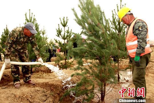 图为园林人员给新栽的树苗浇水。 张添福 摄