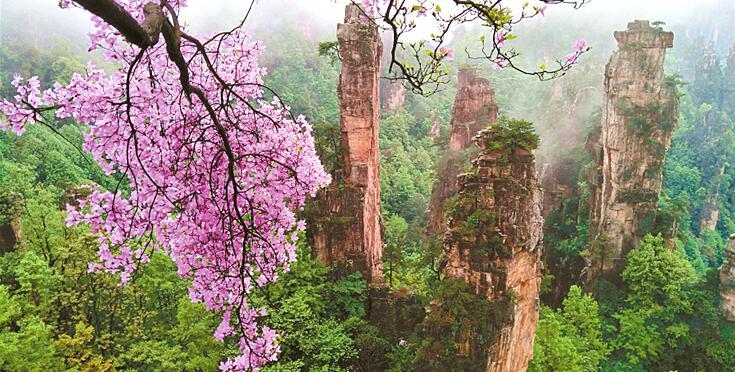 杜鹃花开映峰林