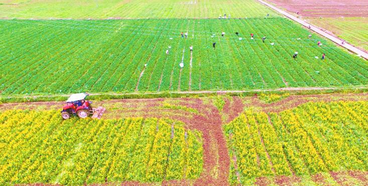 道县:流转土地催生产业农民