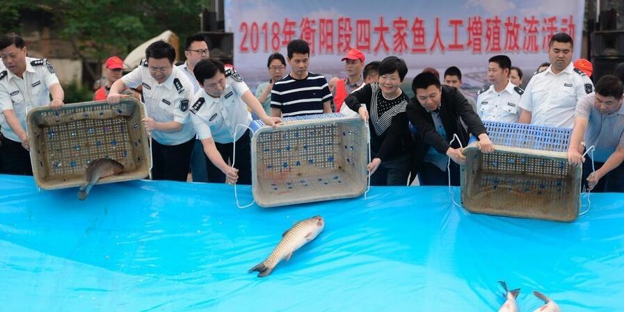 增殖放流 鱼回湘江