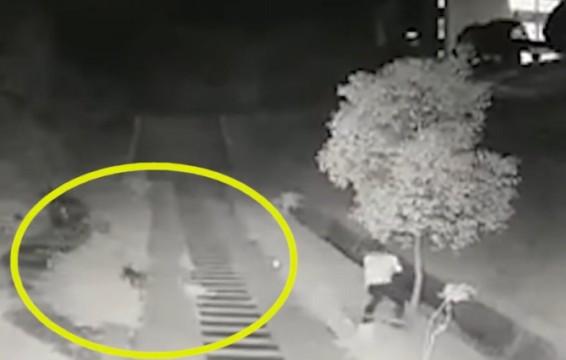 湘潭大学女生深夜被6条狗追咬