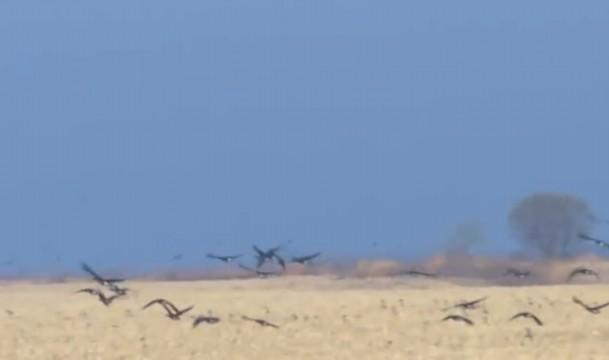 跟着大雁去迁徙