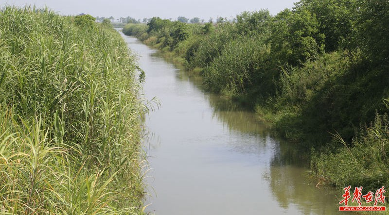 洞庭湖畔的湿地