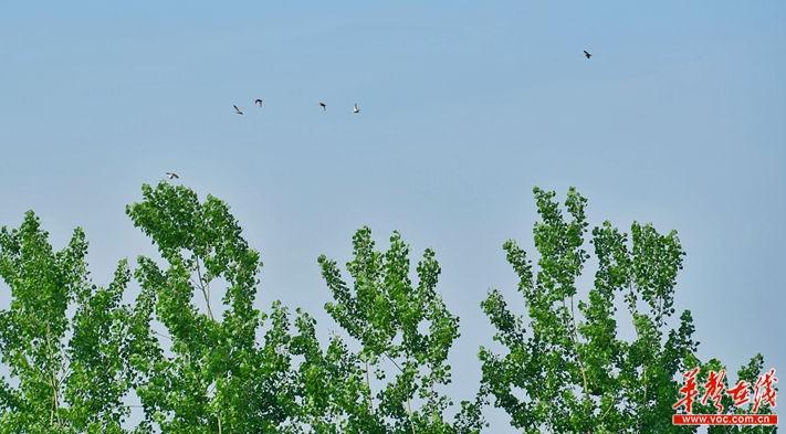 鸟群飞过湖畔