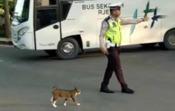 警察指挥流浪猫过马路