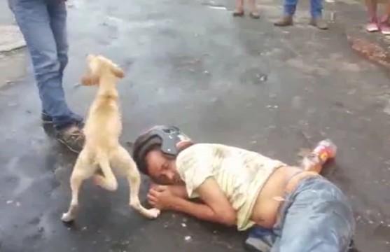一男子醉宿街头 爱犬在身旁忠心呵护