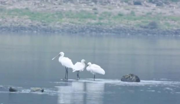 常德桃源:修复水生态 给鸟一个家