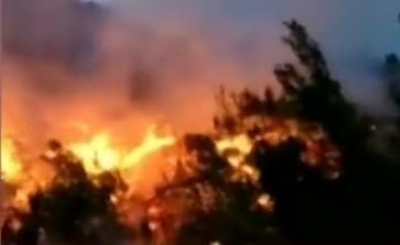 大理发生森林火灾