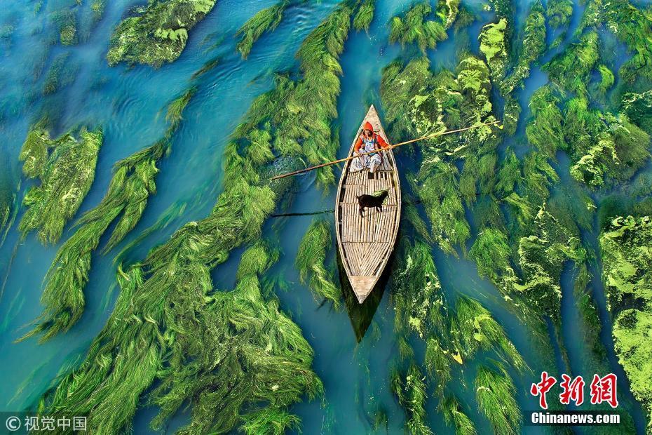 孟加拉小镇水草抢镜 河流浓墨重彩似油画