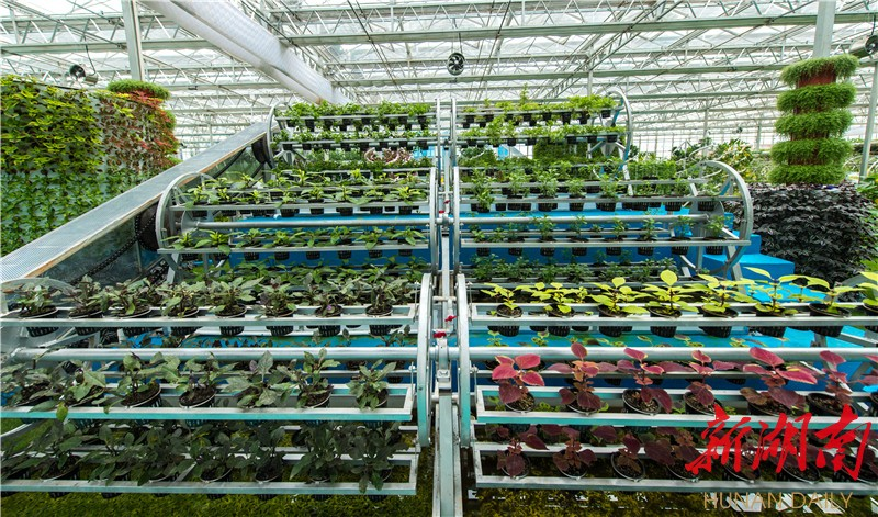 [益阳] 赫山:邀你赴一场益阳现代农业的嘉年华