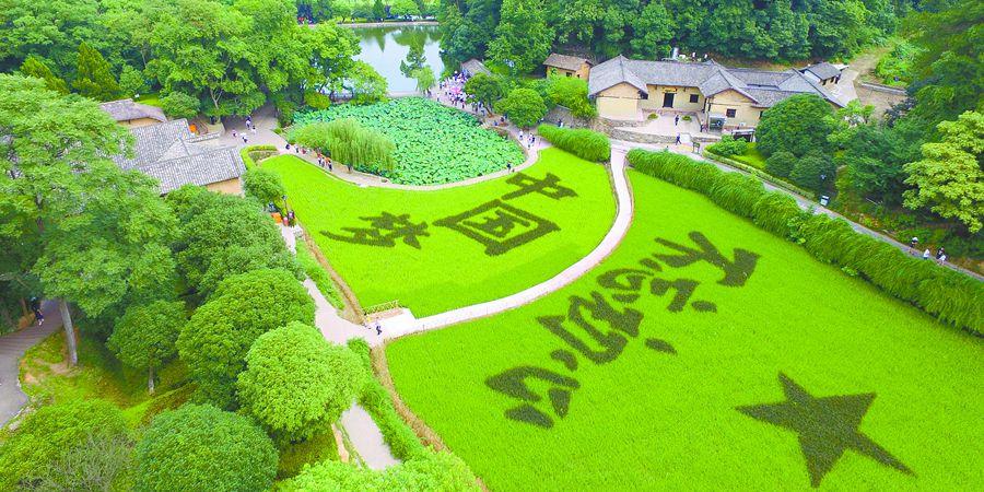彩色水稻添彩韶山