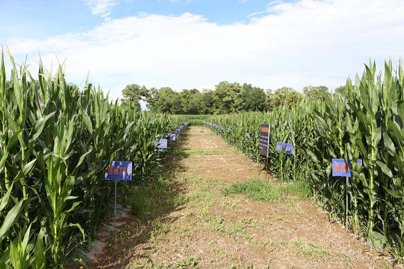 广河县城关镇十里墩村的农业试验示范点