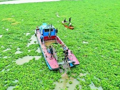 南县清理水葫芦排除污染隐患