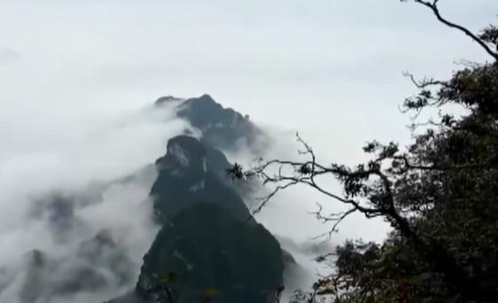 张家界:降雨降温 游客畅游云海云瀑