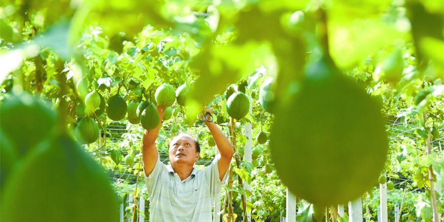 双峰县三石村:发展产业 稳定脱贫