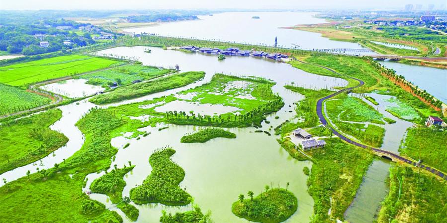 湿地公园生态美