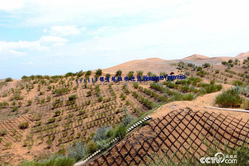 近处是传统的草方格,远处白色的则是用新技术铺设的沙障。