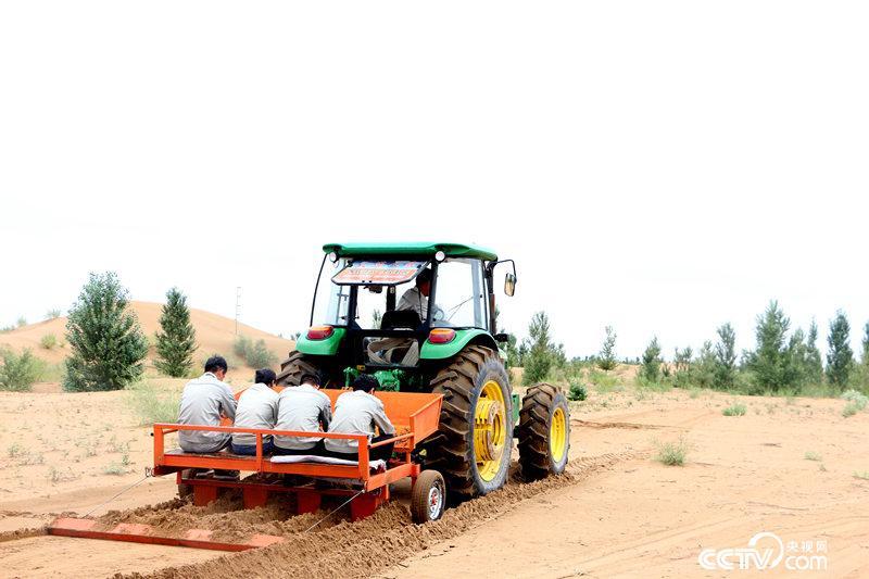 在平缓地带,机械化种植甘草。